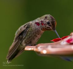 Dinner time by H_D #animals #animal #pet #pets #animales #animallovers #photooftheday #amazing #picoftheday