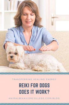 Reiki For Dogs: Transferring Healing Energy - Alternative Medicine Reiki Treatment, Self Treatment, Holistic Treatment, Animal Behavior College, Reiki Training, Dog Training, Reiki Courses, Animal Reiki, Reiki Therapy