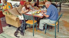 Its impossible to enjoy a simple meal in #Odessa without cats trying to join in.