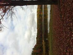 Fall at Round Lake in Reed City, Michigan