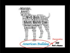 Traits of the American Bulldog The Bulldog's origin lies in the practice of bull baiting, which originated in England around the 13th century. The dog maddened the bull by grabbing it, usually by the