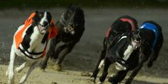 Stop Electrocution of the Greyhounds During the Races! | Shut this place down! Click for details and please SIGN and share petition. Thanks.