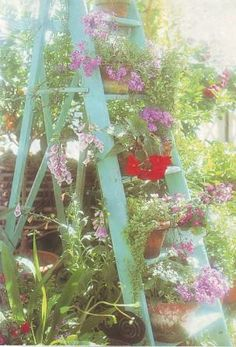 Don't throw away old ladders. They provide wonderful display space for some pot plants on the patio or in an empty corner in the garden.