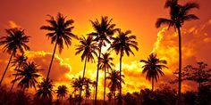 London Design, Inc. Wall Decals & Sticker uStrip Beach Fire Sunset Palm Beach Peel and Stick Removable Full Wall Mural Beach Wall Murals, Custom Wall Murals, 3d Wall Murals, 3d Wallpaper Mural, Photo Wallpaper, Sunset Wallpaper, Beautiful Wallpaper, Paper Installation, Palm Tree Sunset