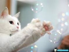 Interactive Cat Toy Loads of Fun for You and Your Cat! - Ideal toys for small cats Bubble Machine, Crazy Cat Lady, Crazy Cats, I Love Cats, Cool Cats, Neko, Best Interactive Cat Toys, Diy Cat Toys, Ideal Toys