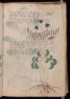 The Voynich manuscript is an illustrated codex hand-written in an unknown writing system. Its pages have been carbon-dated to the early 15th century (1404–1438),