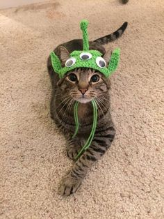 A Collection of Delightful Cat Halloween Costumes - Neatorama - Tap the link now to see all of our cool cat collections! Cute Funny Animals, Cute Baby Animals, I Love Cats, Cool Cats, Pet Costumes, Halloween Costumes, Cat Accessories, Cat Hat, Halloween Cat