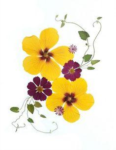 Set of 6 Pressed Flower Cards Hibiscus Made by VTPressedFlowers, $10.00
