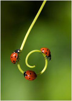 Three ladybugs circle a six...