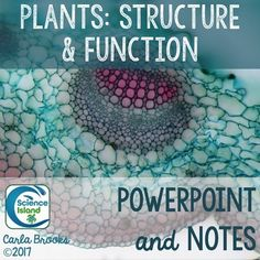 Plants: Structure and Function PowerPoint and Notes for Biology covers roots, stems, leaves, growth, nutrition, transport, hormones, adaptations and more!