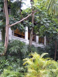 A green paradise in the gardens of The Raffles Hotel in Singapore