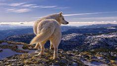 paisajes hermosos con animales perros