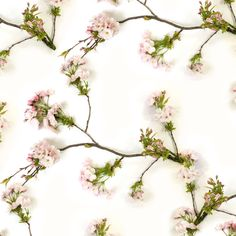 Wallfashion: PATIO, Blossom, by Muurbloem