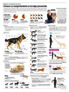 Cómo evitar el ataque de un perro German Sheperd Dogs, Pet Paws, Puppies Tips, Happy Animals, Animals And Pets, Dressage, Chihuahua Dogs, I Love Dogs, All Dogs