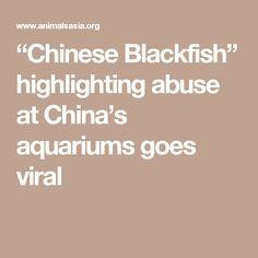 """""""Chinese Blackfish"""" highlighting abuse at China's aquariums goes viral"""