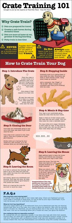 Crate Training 101 | http://thatpetplace.com The crate; some pet parents swear by them, while others don't use them or use them only as a training tool.  Some people find crate training too hard and give up part way through the process.