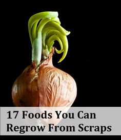 17 Foods You Can Grow From Kitchen Scraps
