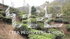 Potong Cooperative Tea Garden by Equal Exchange #fairtrade #tea