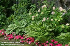 Hydrangea hostas and fern with impatiens. To add the hint of color with the impatients?