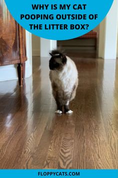 Why is my cat pooping outside of the litter box on the floor? It is not uncommon for pet owners to be faced with the issue of a cat who will pee inside the litter box, but poop outside of it—sometimes even right next to it. In this article there are a few possible explanations for this frustrating problem and some suggestions for how to fix it. Hiding Cat Litter Box, Best Cat Litter, Cute Cat Names, Cat Behavior Problems, Cats And Kittens, Ragdoll Cats, Cat Hacks, Cat Sitter, Long Haired Cats