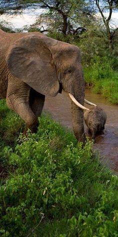 Elephants in Ghana
