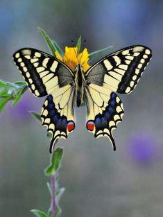 Butterflies r free to fly. Fly away high away. Bye bye. Elton John.