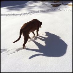 Who's Afraid of The Big Bad Wolf? Webster's Scary Shadow | Content in a Cottage