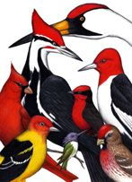 Red Hat Society (card)/Birds on Things by Don McMahon