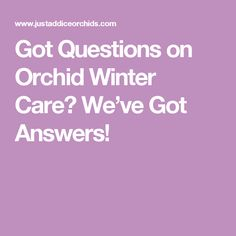 Got Questions on Orchid Winter Care? We've Got Answers!