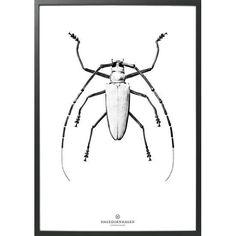 poster Black & White | Hagedornhagen | DesignLemonade.com