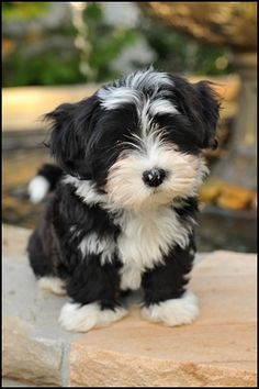 The cute puppy standing on the rock wall