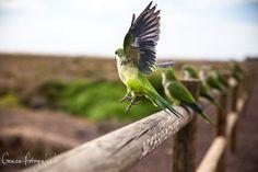 Papagei Bewegung fotografieren