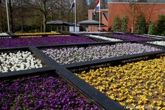 Flower mosaic in bloom! Theme Dutch Design! #travel to the #tulipsinholland spring 2017 http://tulipsinholland.com/tickets-tours-keukenhof/