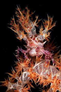Where doe this crab begin and end???  By Gazzaroli Claudio