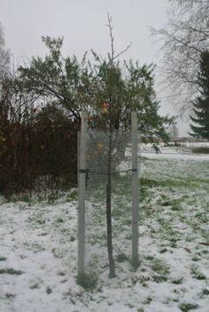 Puiden talvisuojaus | Carmenia Oy