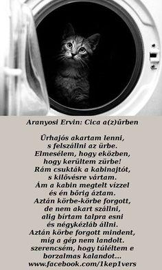 Humor, Pictures, Animals, Quotes, Photos, Animales, Animaux, Humour, Photo Illustration