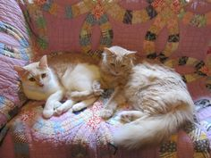 ❤ =^..^= ❤ Missy's Homemaking Adventures: Cats on Quilts