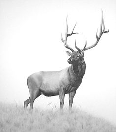"""Young Royalty"""" A charcaol and pencil drawing by J.D. Hillberry"""