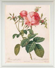 BelleBotanica      Antique & Vintage Garden & Nature Inspired Art Prints