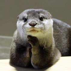 Aww look at me what a fashionable little otter I am!