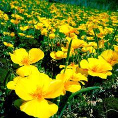 yellow so pretty