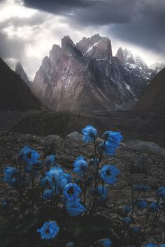 Ideas For Hintergrundbilder Nature Berge Beautiful World, Beautiful Places, White Mountain National Forest, Torres Del Paine National Park, Concours Photo, Landscape Photographers, Nature Pictures, Belle Photo, Amazing Nature