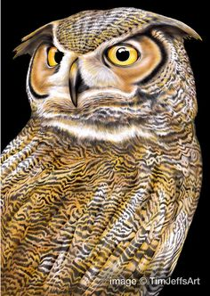 Owl 2 Colored Pencil Drawing. Signed by Artist by TimJeffsArt