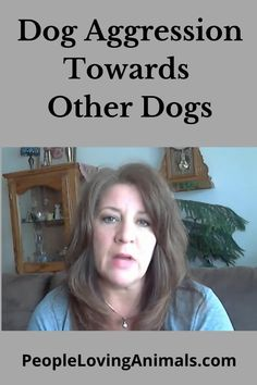 Dog Aggression Towards Other Dogs - Why They're Aggressive and How to Solve It, stop dog-on-dog aggression, Dog Training