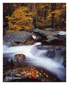 Middle Prong Little Pigeon River, GSMNP, by Nye Simmons