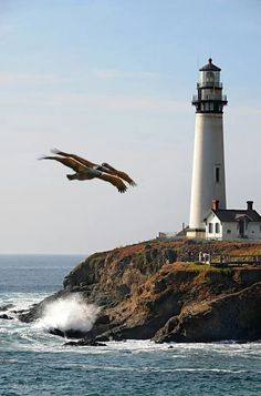 Yaquina Head Lighthouse (Oregon) and brown pelicans