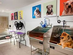 AVA DoBro is a new kind of living space in Downtown Brooklyn, NY. Dog Grooming Shop, Dog Grooming Salons, Dog Grooming Business, Pet Shop, Dog Bedroom, Puppy Palace, Dog Spa, Pet Hotel, Dog Salon