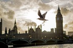 Seagull photobombs Big Ben,  by Nicky Napkins on Flickr.