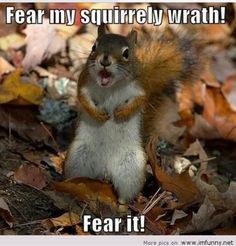 Fear the wrath!!!!  Funny animals