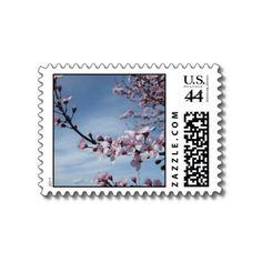 Zen Pink Cherry Blossom Postage